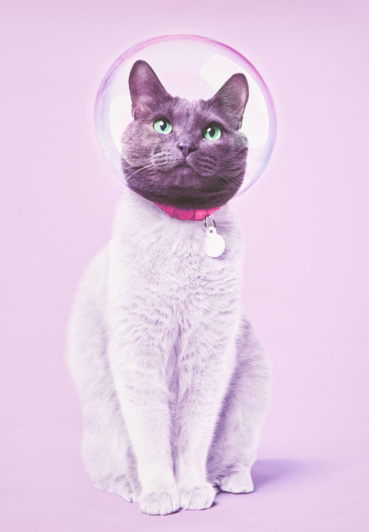 لوحة برسمة قطة