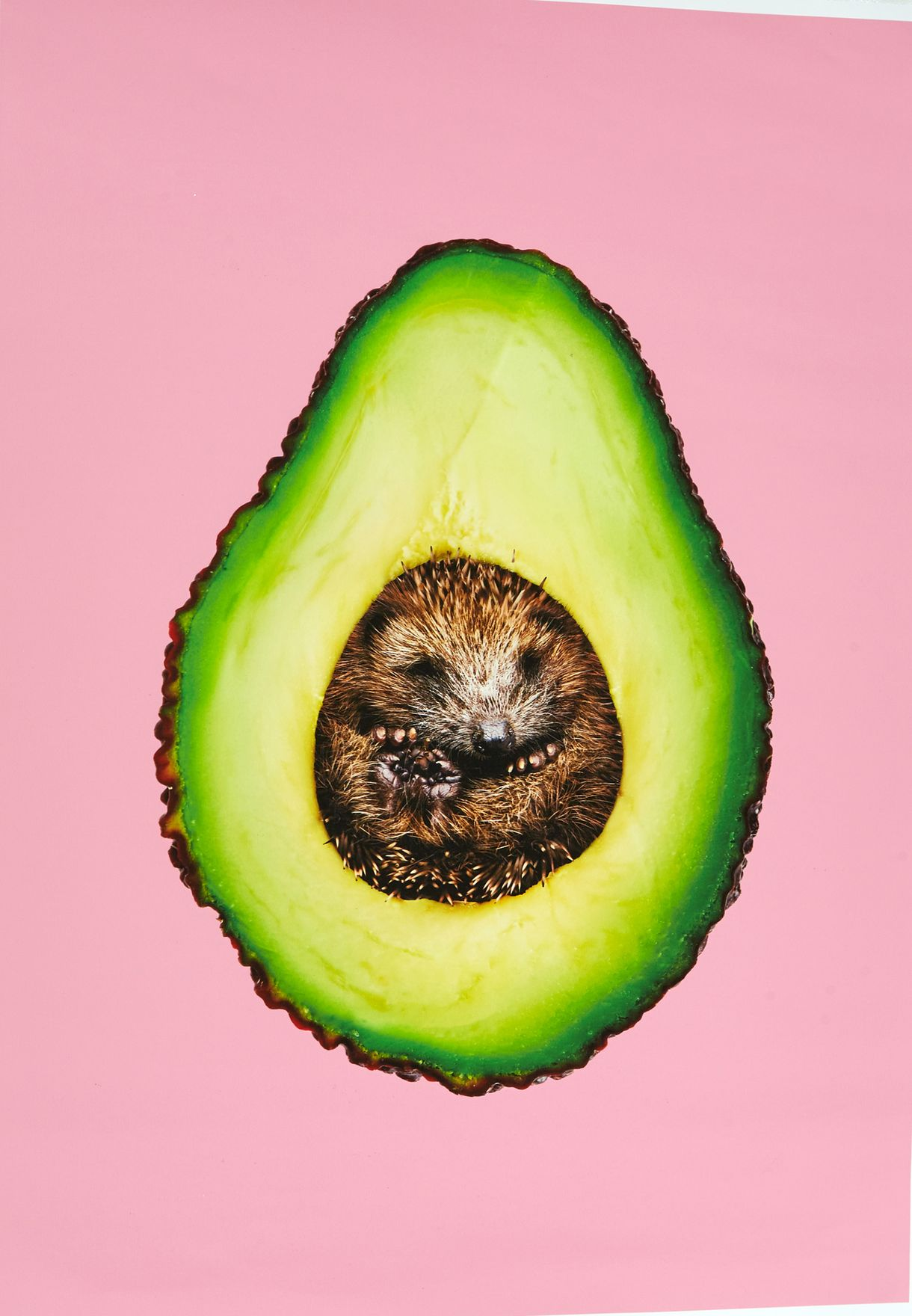Avocado Artwork 50x70cm