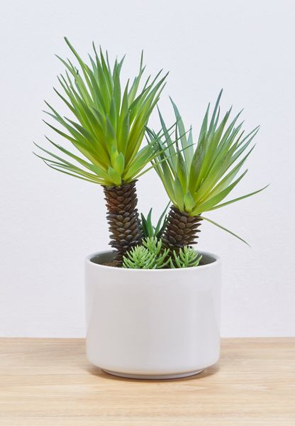 Large Ceramic Planter and Plant