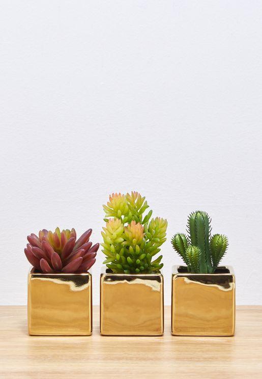 مجموعة من 3 اصيص نبات