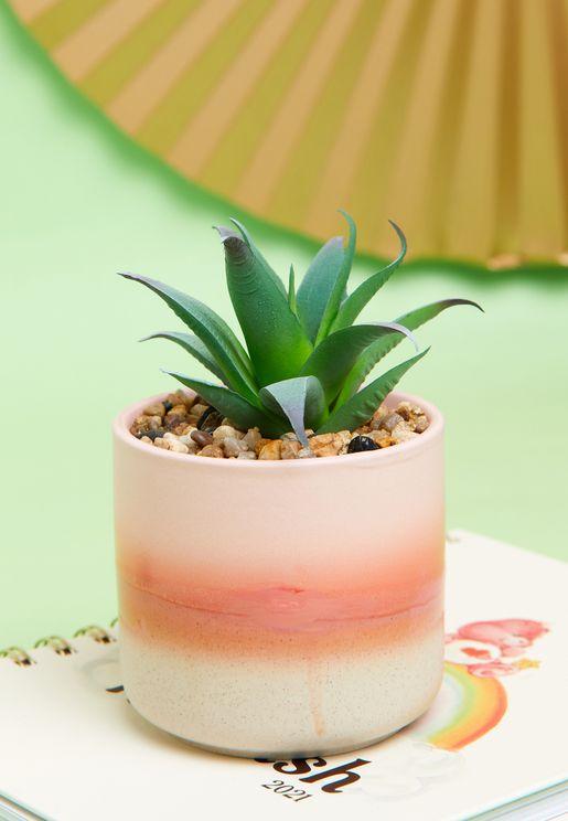 اصيص نبات ميني
