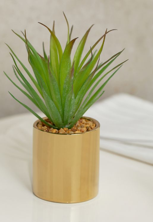 Succulant Plant in Gold Pot