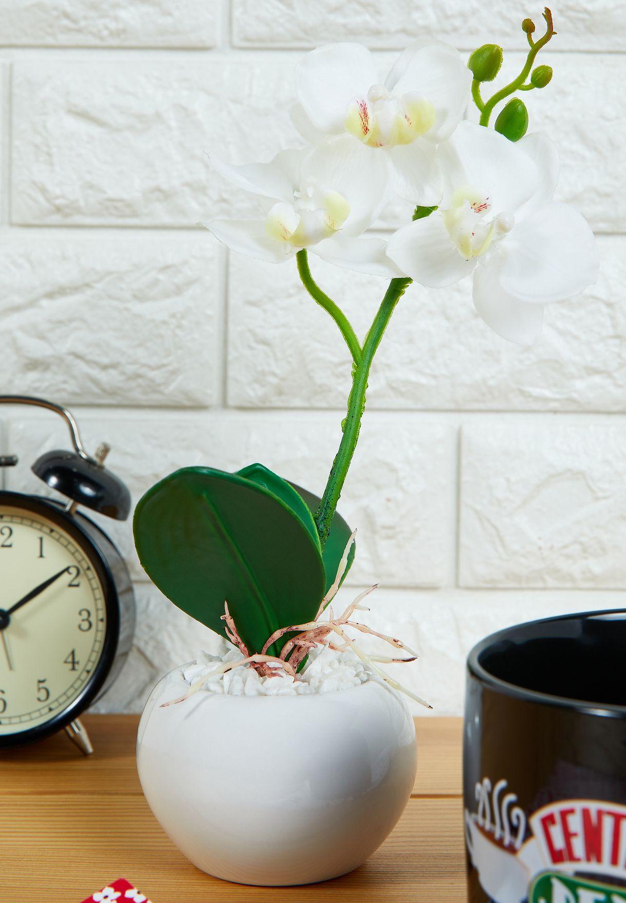 وعاء نبات اوركيد صناعي