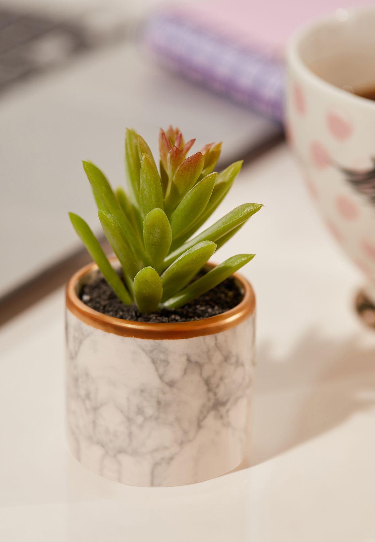 اصيص نبات