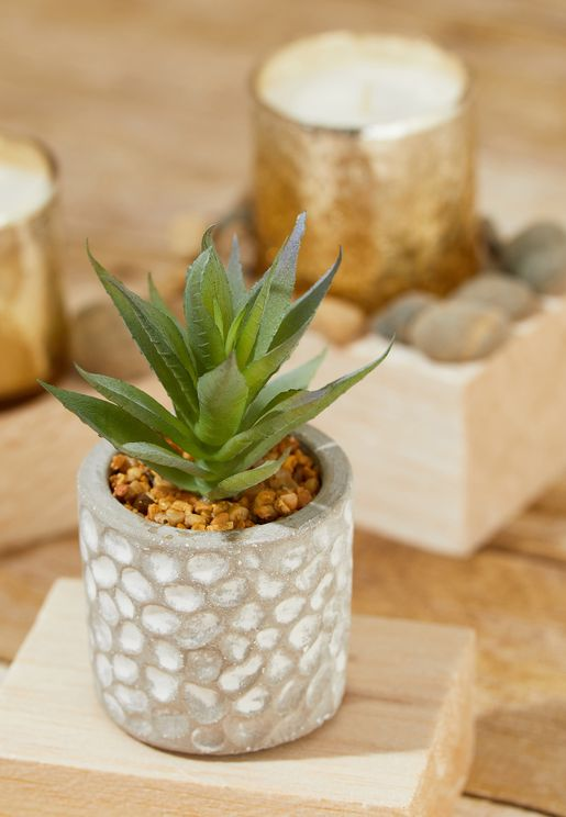 Succulant Plant in Spotty Cement Pot