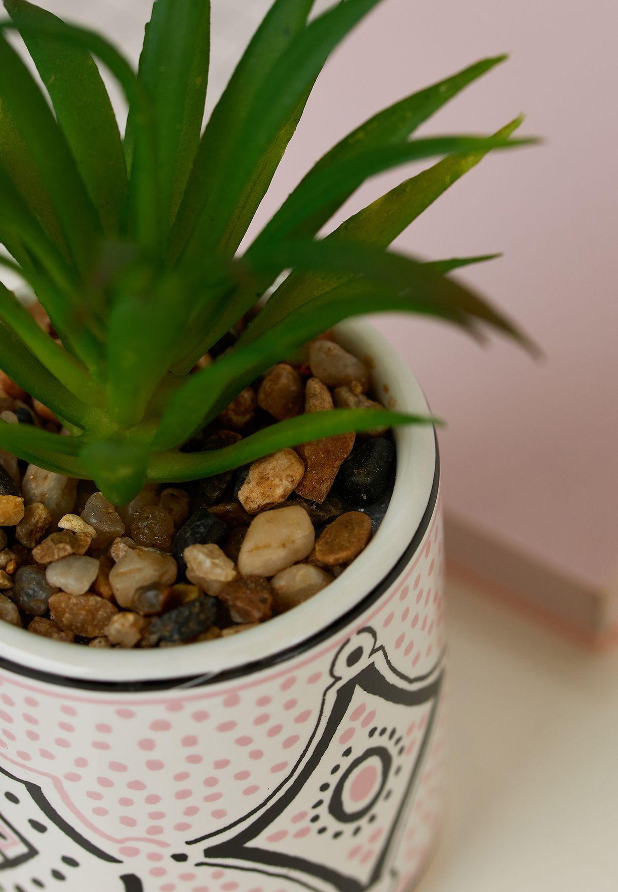 اصيص نبات مطبع