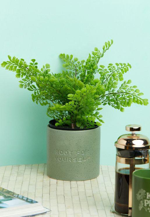 اصيص نبات بحجم متوسط